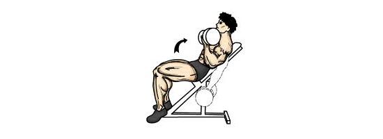 Bicepsový-zdvih-s-jednoručkami-na-šikmé-lavici-cvičení-doma-posilování-kulturistika