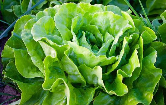 Zdravý jídelníček: Hlávkový salát